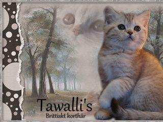 tawallis.se
